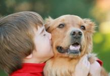 managing pets